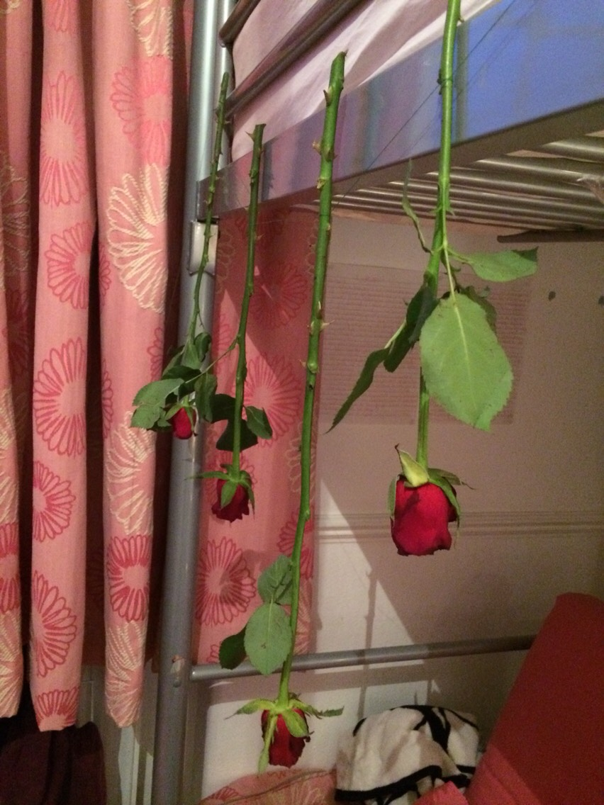 """Hang the """"necklace of roses"""" somewhere where they won't be disturbed."""