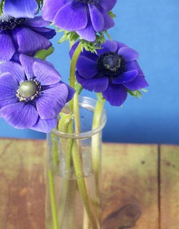 Make Fresh Cut Flowers Last Longer! by Kat K - Musely