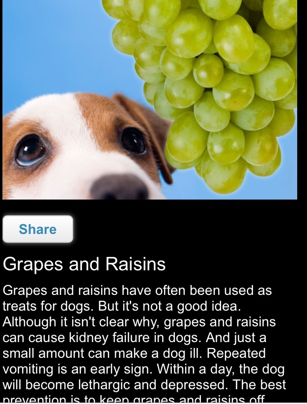 grapes and raisins can cause kidney failure in dogs. And just a small amount can make a dog ill.