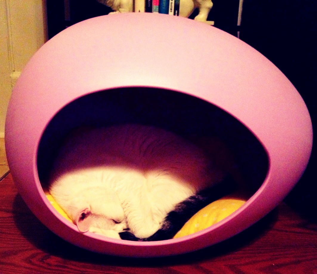 This is my kitty Gatsby in his Pei Pod! It's the cutest thing ever and he loves sleeping in it! Find it on Fab.com. It's the perfect Xmas gift to your pet! <3