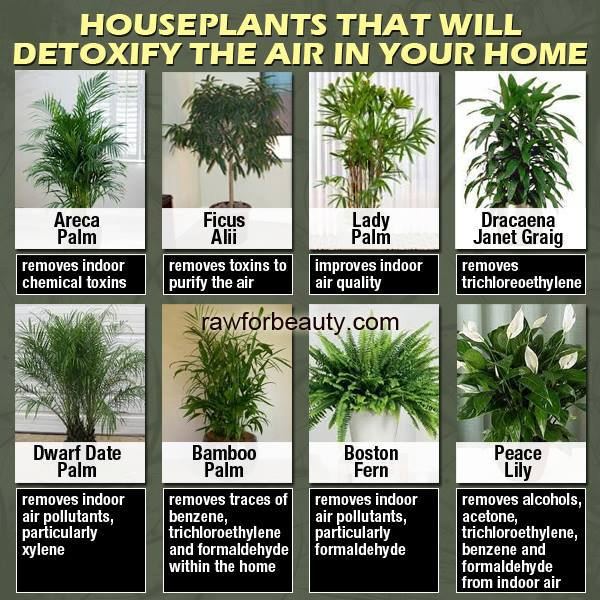House Plants That Will Detoxify The Air In Your Home