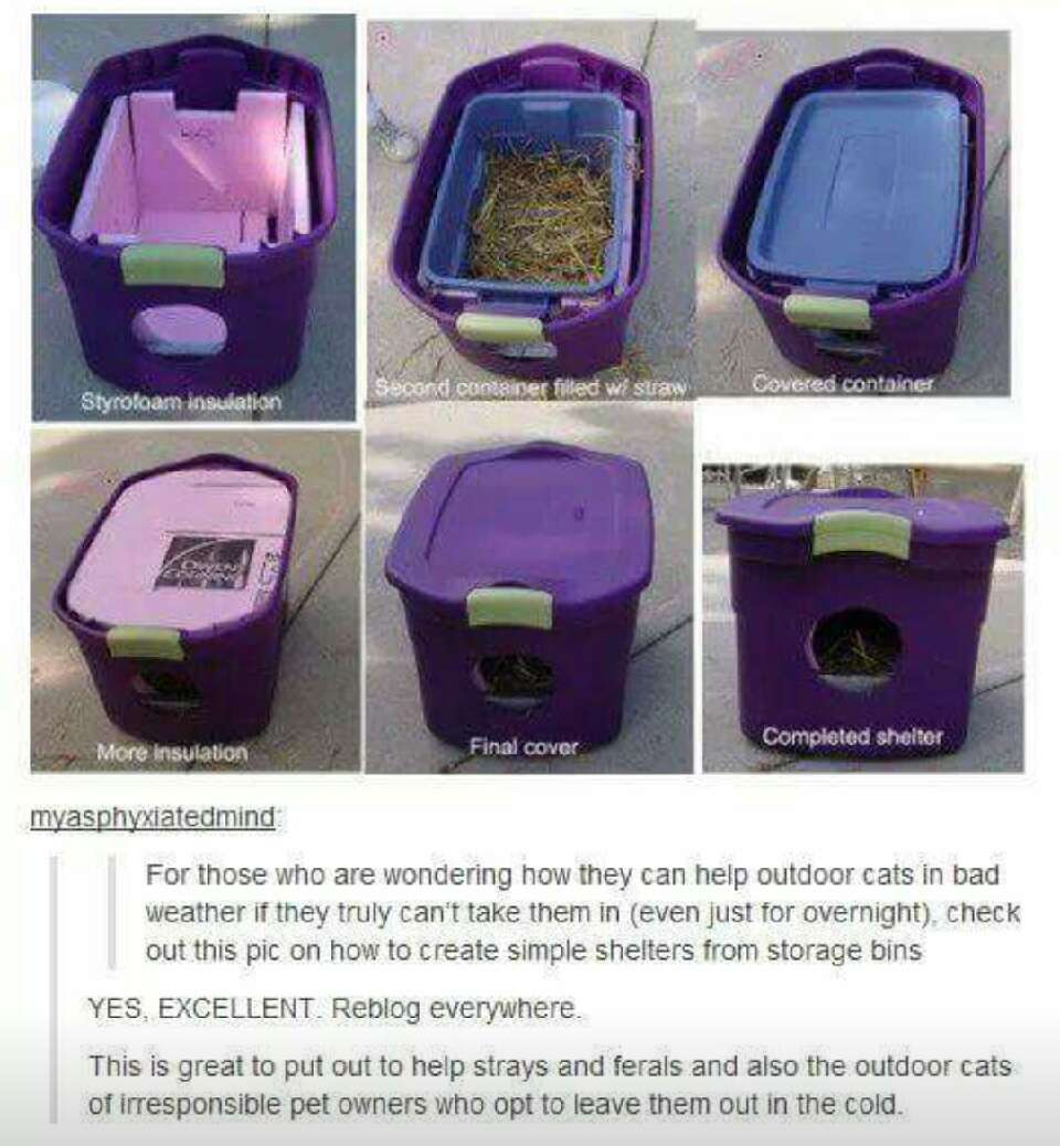 make sure you place it somewhere safe & where you normally see the cats so they can find it.