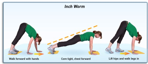 Inchworm / Walk Out – 3 sets 15 reps