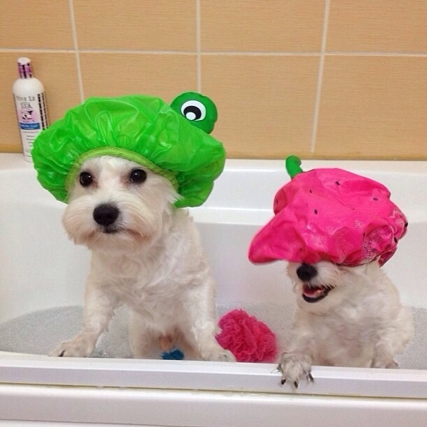 11. Use a teapot to rinse dogs off in the bathtub without getting water and soap in their eyes.