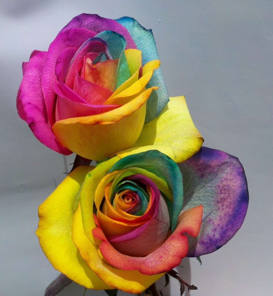 4 Place the flowers into the vase of colored water, stems first.