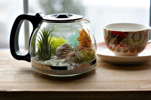 Terrariums are cute little gardens that you can make yourself. They're art. They're always so beautiful.