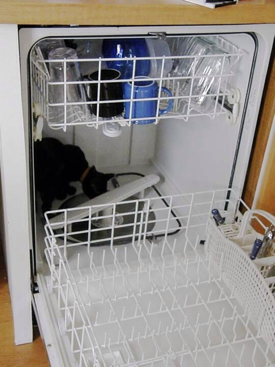 Save time by using your dishwasher to wash things other than dishes. Pls tap for full view.