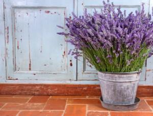 Lavender:  You probably know that lavender is a gorgeous purple flowering plant with a soothing, calming scent. But, did you know that it is also a natural mosquito repellent?