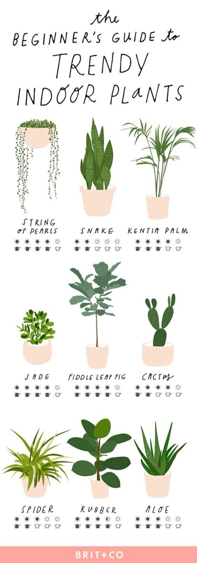 Plant Guides To Help You Choose The Best Plants For Your