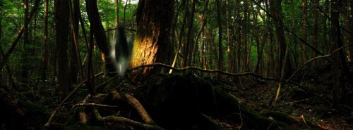 2. Trees of the Sea – suicide forest  Aokigahara, also known as the Trees of the Sea  is a 35-square-kilometre forest that lies at the northwest base of Mount Fuji in Japan