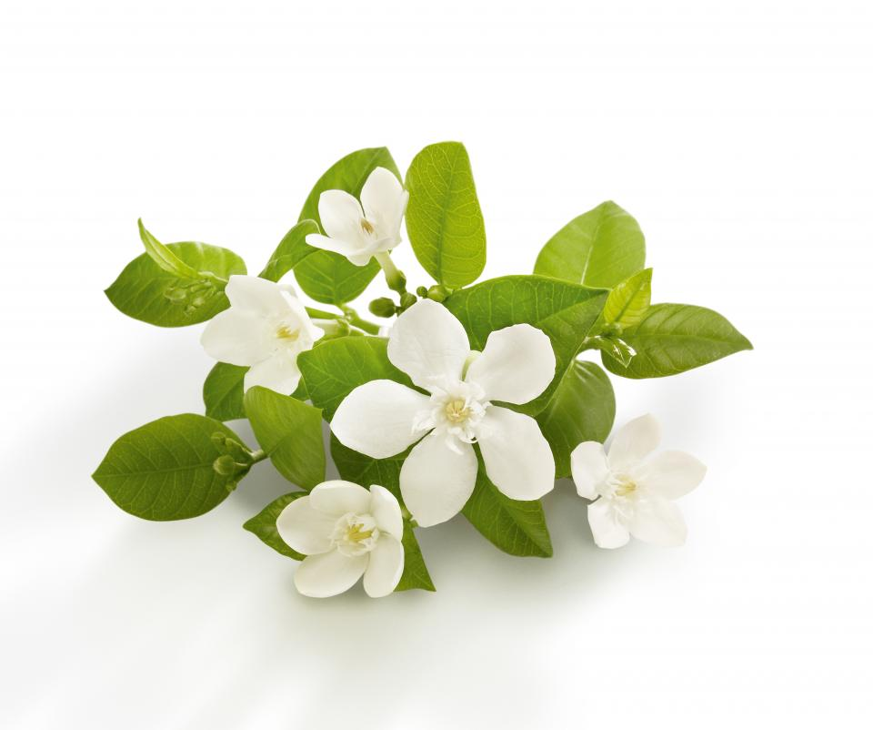 Neroli  Can treat devitalized, mature, aging and sensitive skin types