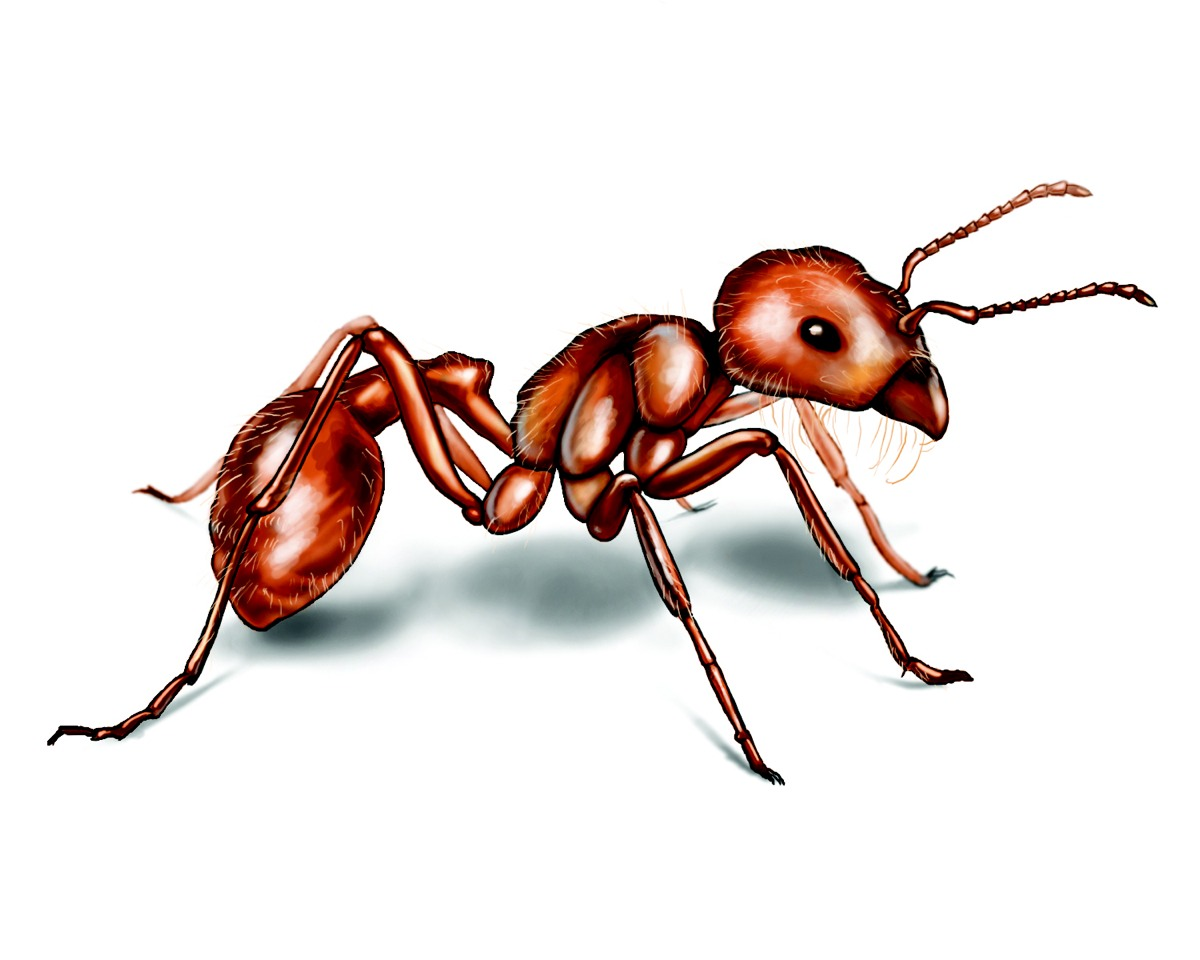Ant problem??