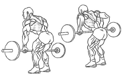 2: Bent Over Barbell Rows