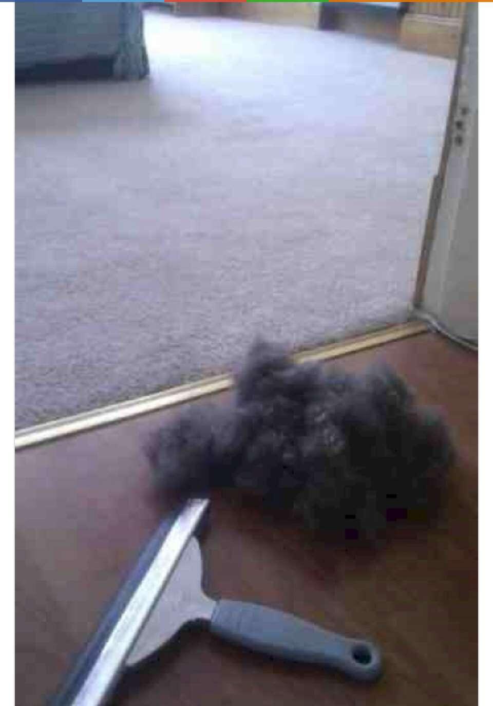22.  Pet hair no more