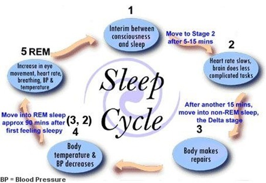 Following on the same thought, you NEED sleep. If you think you can study all night and still rock your exam, you are WRONG! A good night sleep is crucial for your memory to keep all of this information you brought in.