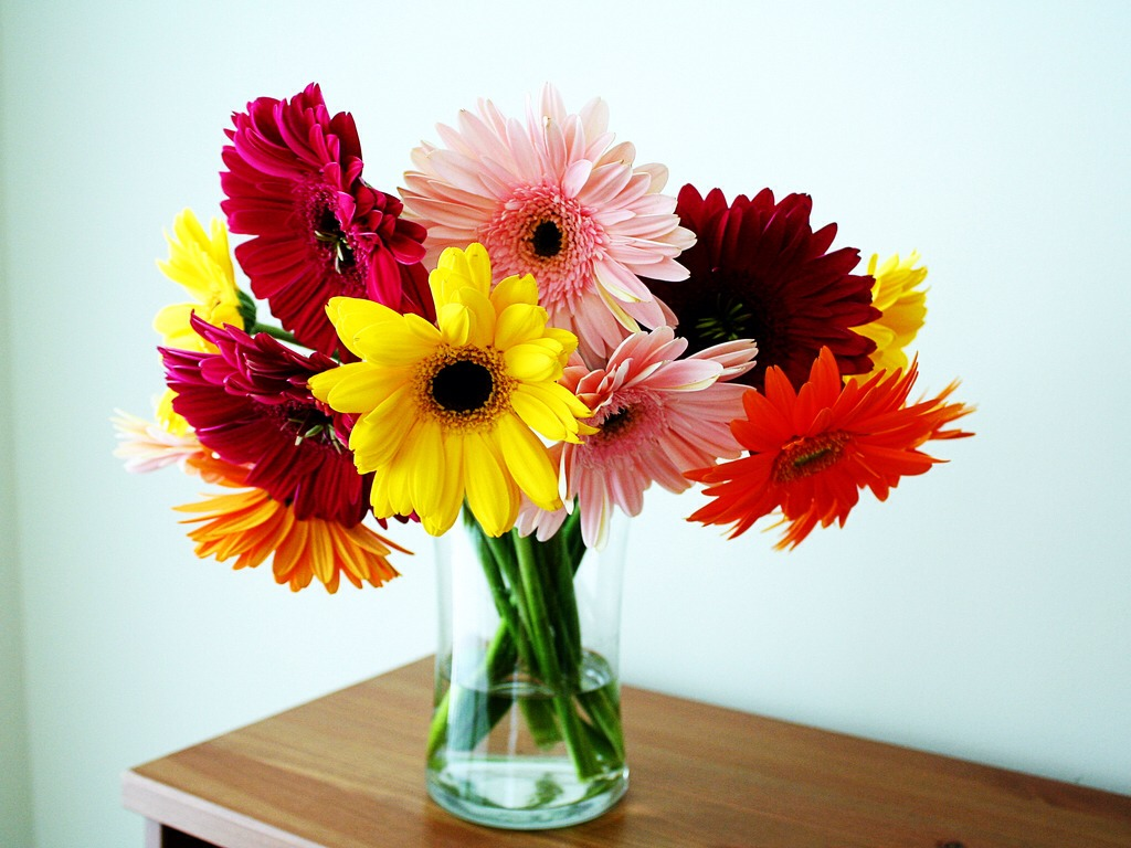 Got some store bought flowers? Or picked some? Have them last longer so you can enjoy them to the fullest!