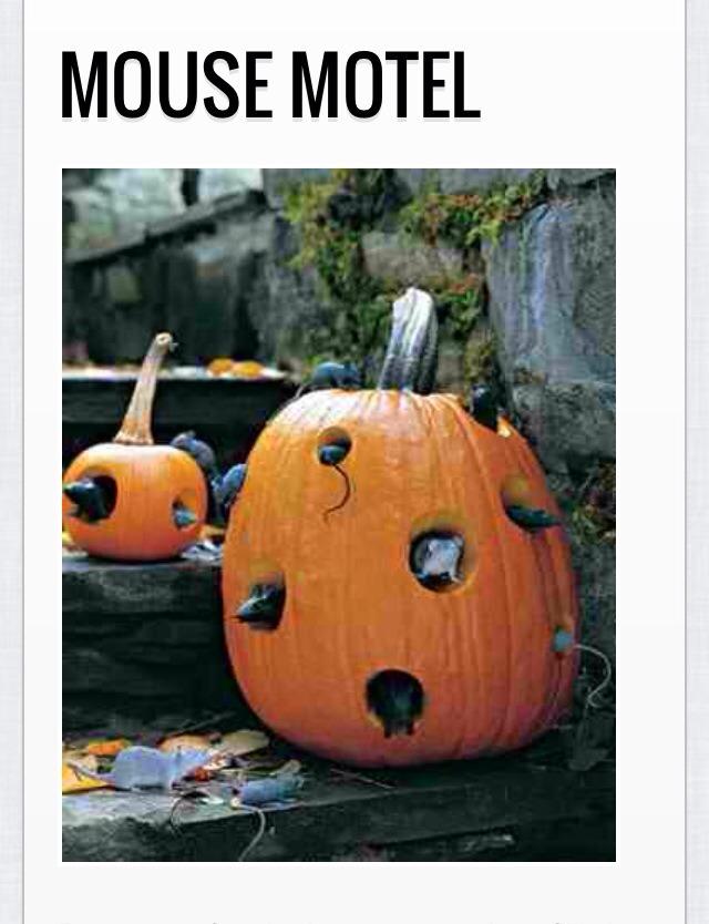 Cheap fake mice to pumpkins