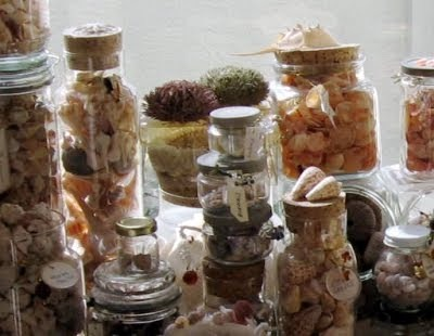Collect shells and bottle them up!