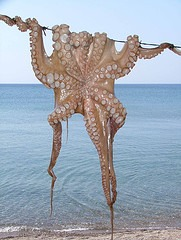 An octopus has three hearts