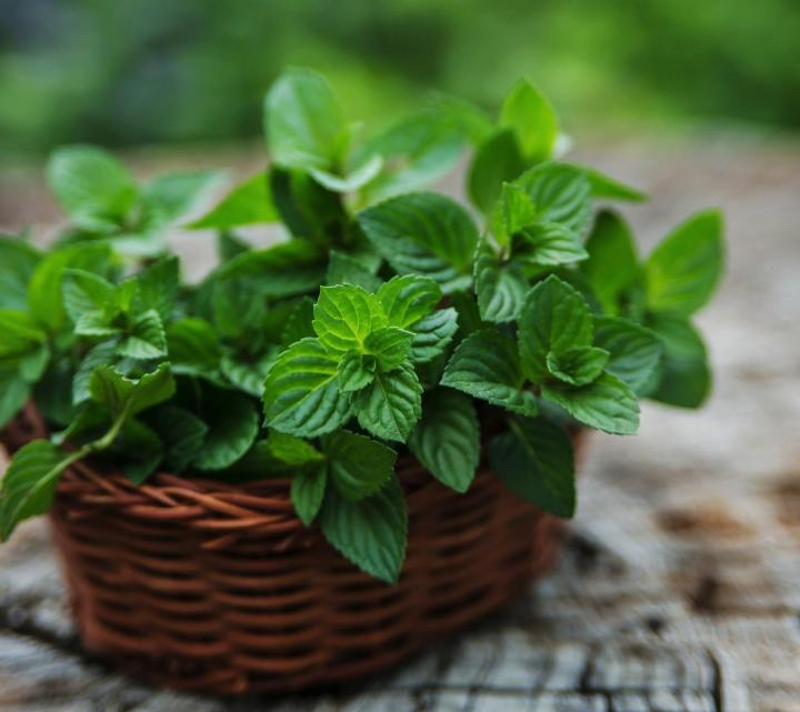 Mint: A well known appetizer or palate cleanser, mint promotes digestion. Soothing the stomach in cases of indigestion or inflammation, even the aroma of mint can activate the salivary glands in our mouth as well as glands which secrete digestive enzymes.