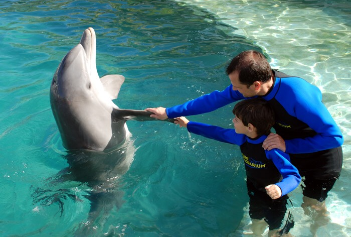 Dolphin petting time
