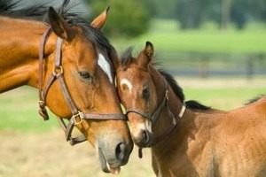 If you get a horse they need to be fed a half or a whole bale of hay never feed them hay that has been rained on they need a big bucket of  new water everyday if your horse has a baby make sure that the baby gets as much care as the mom does. never forget about the mom though