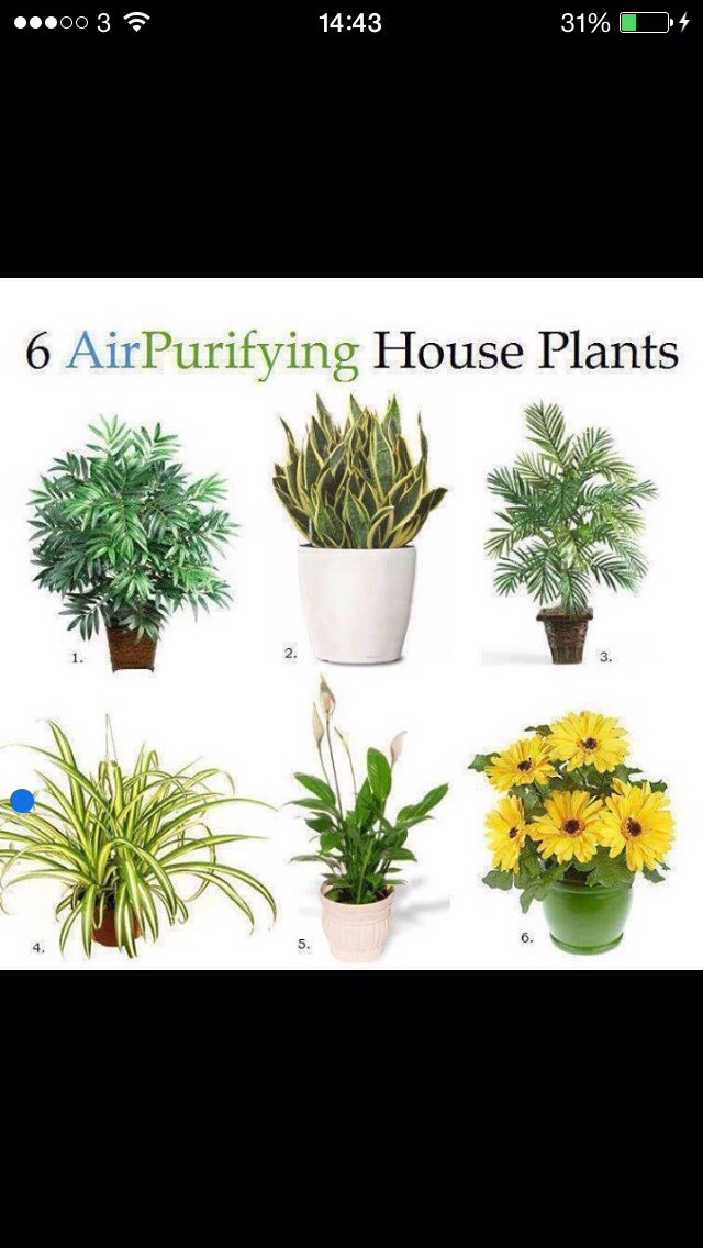 Musely - Beautiful house plants ...