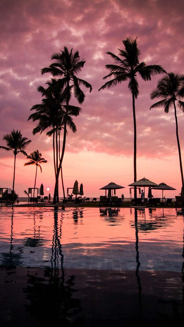 palm trees sunset tumblr. Palm Trees Sunset Tumblr O