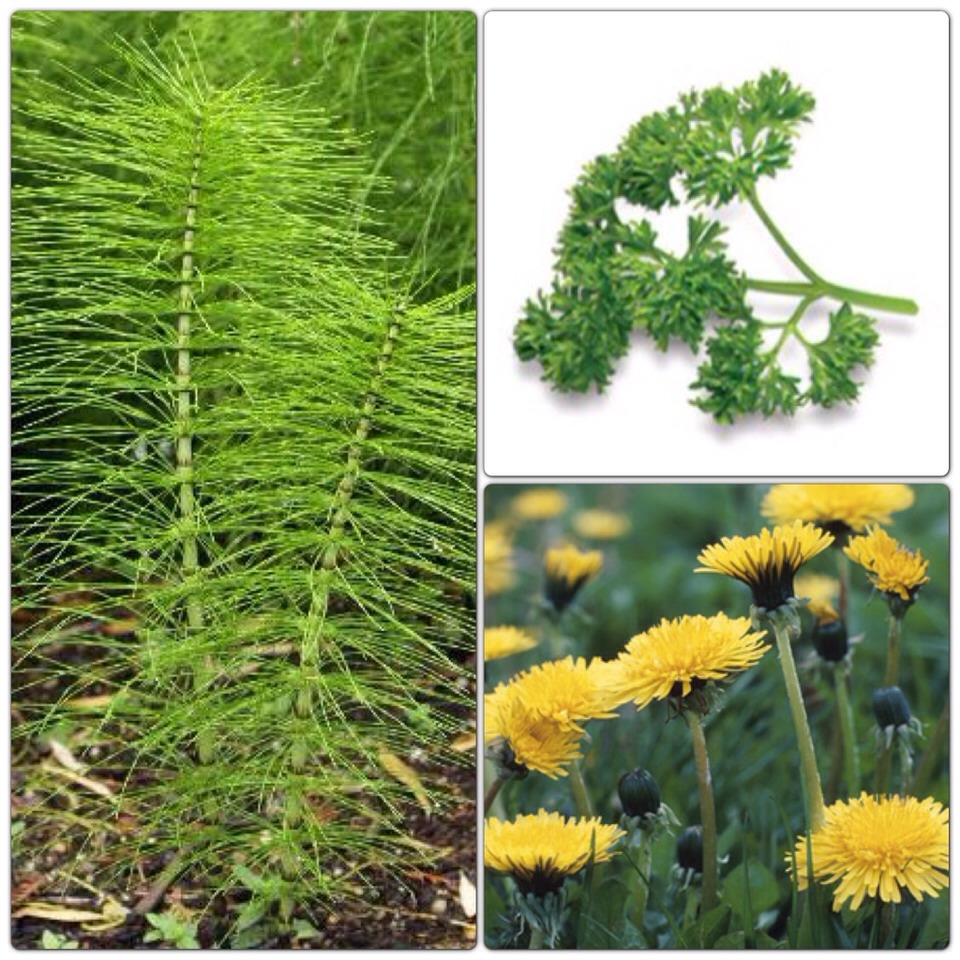 Diuretic herbs can help take care of fluid retention and the feeling of bloat that often accompanies menstruation. Parsley, dandelion, hydrangea, angelica, and horsetail all have diuretic properties. Drink infusions or decoctions of these herbs.