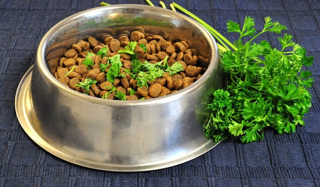 31. Sprinkle parsley on your dog's food for fresher breath.