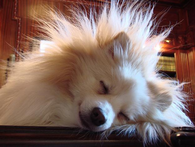 17. Run a dryer sheet over your dog's fur when there's a storm — chances are, they aren't freaked out about the storm but the static electricity built up in their fur.