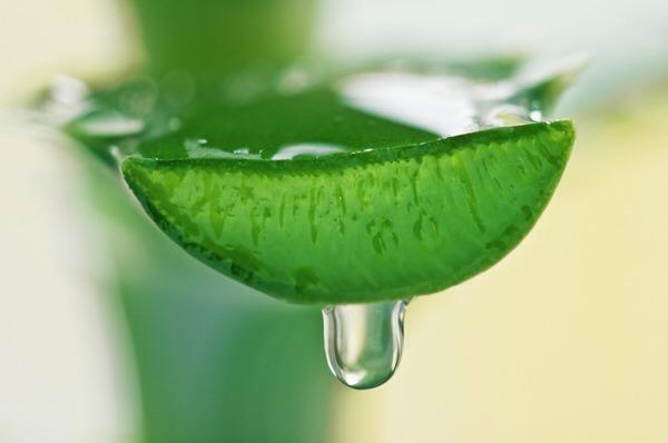 Say yes to fresh Aloe Vera!