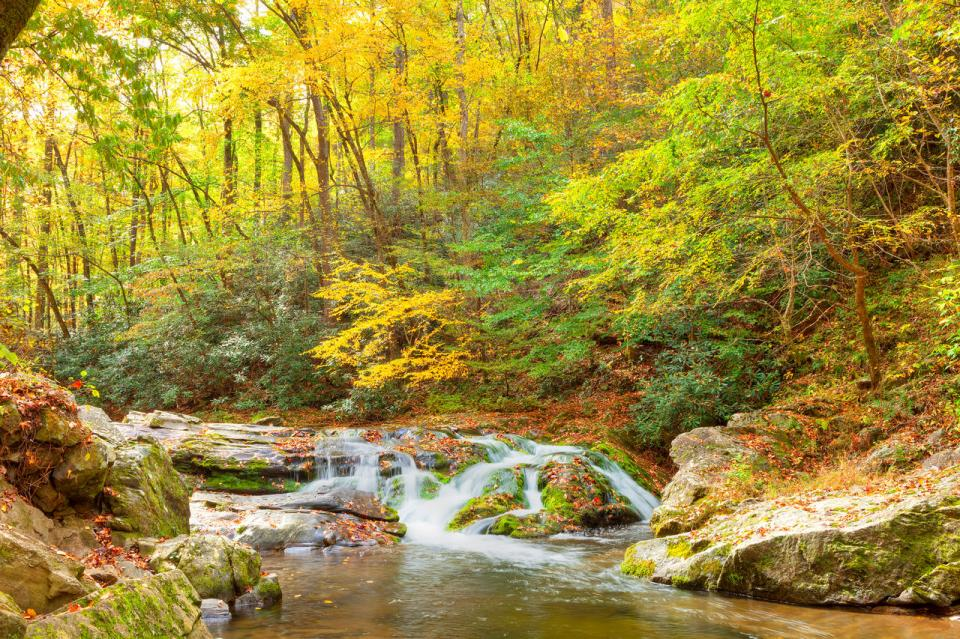 The Smokies—Great Smoky Mountains National Park straddles the ridgeline of the Great Smoky Mountains, encompassing 522,419 acres. It is the most visited national park in the United States.