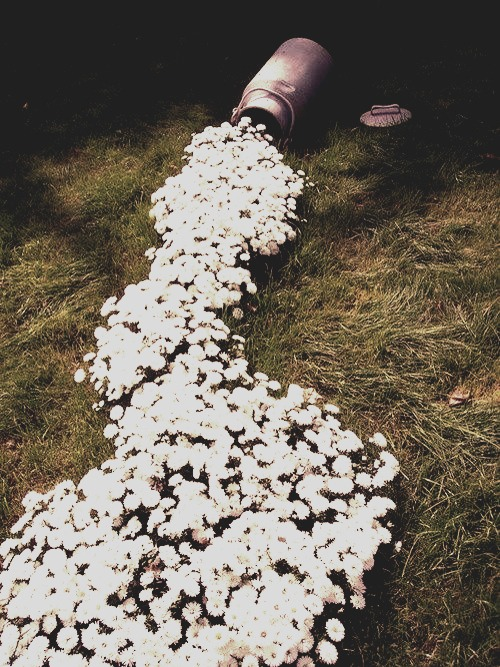 "This is a pretty cute idea for your garden. Find and old milk can, and just plant white flowers in a wavy pattern. Then, you get this ""spilled milk"" conclusion."