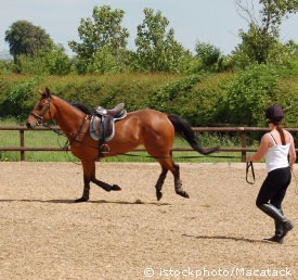 Lunge- helps a lot if your not an everyday rider or actually bonding with your horse will help, making a real connection with them will make your horse want to work hard and enjoy the challenges you give them.