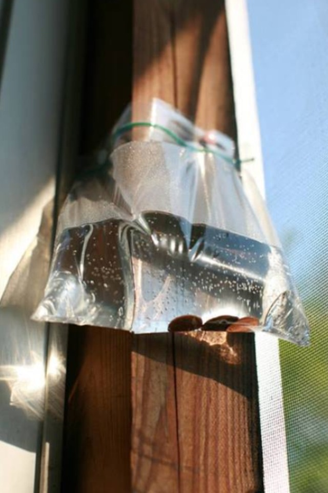 Just fill and hang above window or doorways and it will keep flies out!