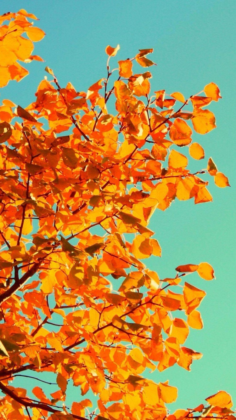 Cute iPhone wallpapers for fall - Musely