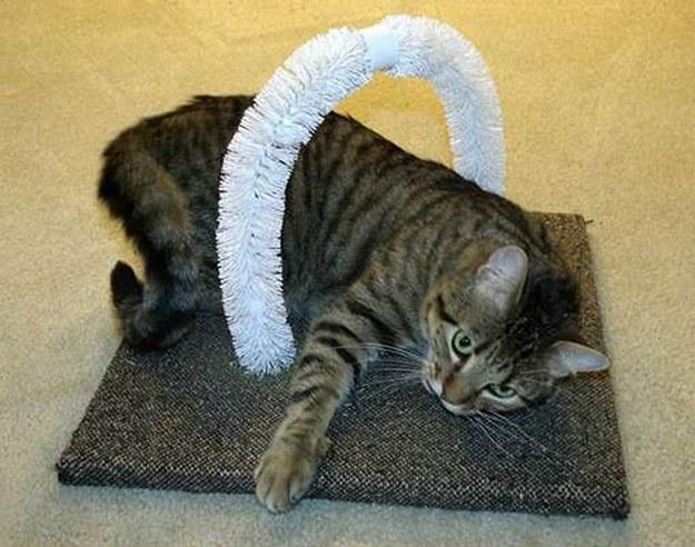 9. Let your cats scratch themselves with this DIY self-petting station made with toilet bowl brushes. Directions here. http://www.lovepetsdiy.com/diy-self-petting-station-for-cats/