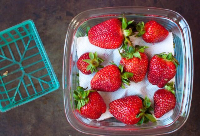 Lay another paper towel over the first batch of strawberries, and then place more strawberries on top. Do this only if your container is large enough, you don't want to smash the strawberries when you put the lid on.
