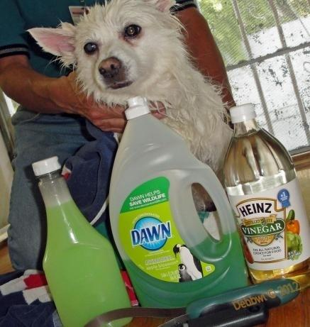 24. Make your own flea shampoo. 1 cup Dawn, 1 cup vinegar, and 1 quart of warm water. Massage in and let it sit for five minutes. The fleas would just float in the water and die.