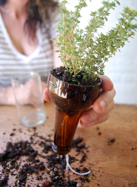 By now you should have two pieces of the bottle and now you're ready for a fancy plant