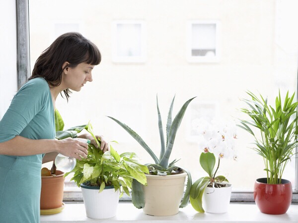 Headache Indoor plants create oxygen and lower the carbon dioxide level, so you're less likely to be breathing the musty, stale air that contributes to headaches. Allergies Exposing your children to plant-related allergies early in life will build your child's immunity.
