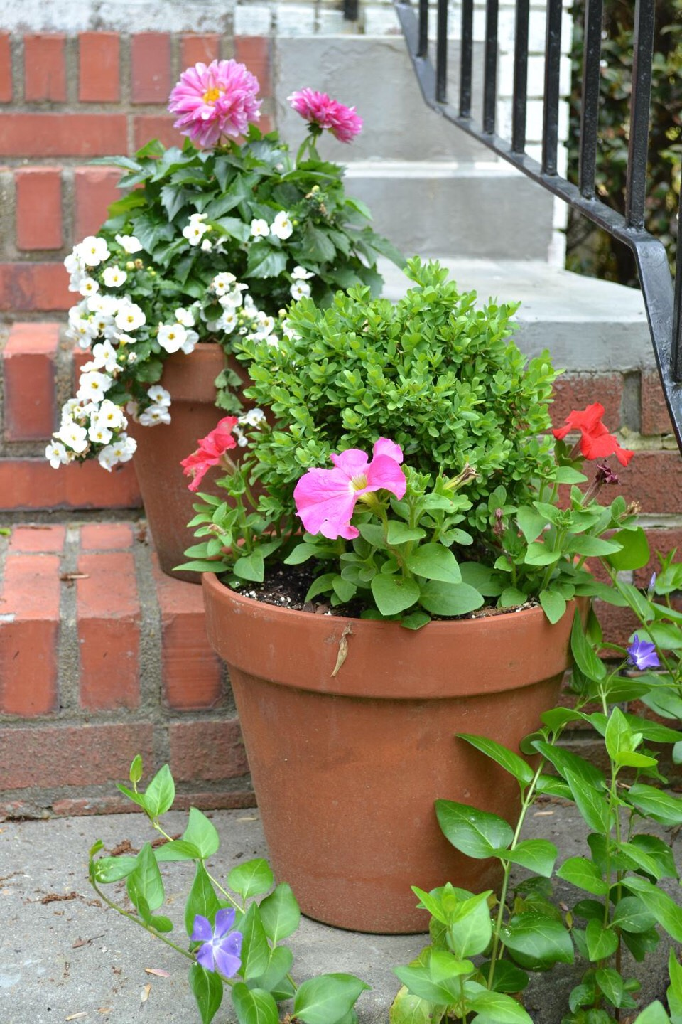 Bring potted plants inside before the temperature drops below freezing.