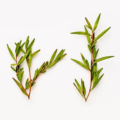 Tea tree oil to fight infections Antifungal, antiseptic and antibacterial, this oil is so potent that it has killed MRSA and staph in lab settings. Mix it with a carrier oil to fight off athlete's foot, acne and dandruff, or add a couple of drops to a squirt of your shampoo.