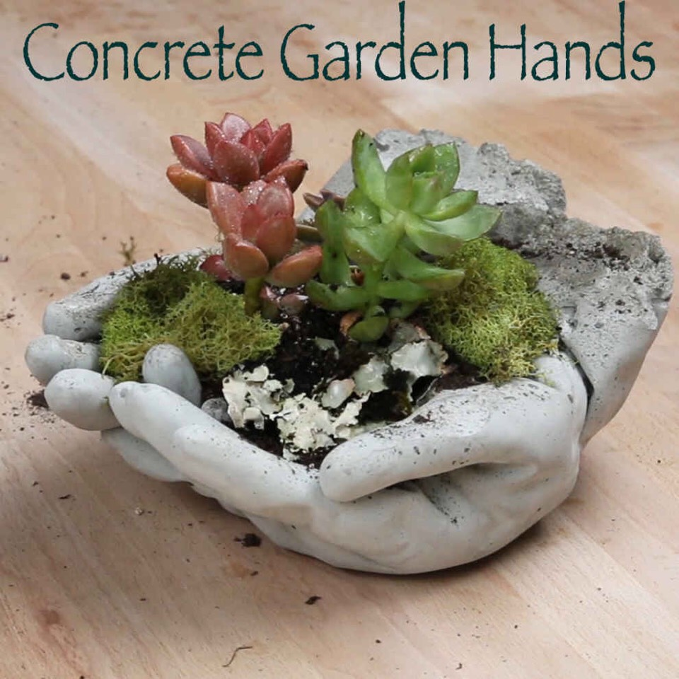 Use small pliers to help remove the small stubborn left over glove pieces. Add garden soil and small succulents to your planters. Add pieces of preserved moss to decorate your planter. Water accordingly with a spray bottle. Place in a location that creates an interesting topic of discussion. Enjoy!