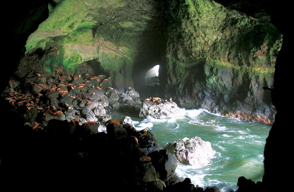 Sea lion Caves!