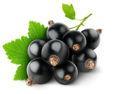 Rich in vitamins, antioxidants, essential fatty acids and anti-inflammatory properties, Black current oil helps slow down the skin aging process and is wonderful for repairing damaged tissues, healing scars and minimizing the appearance of fine lines and wrinkles.