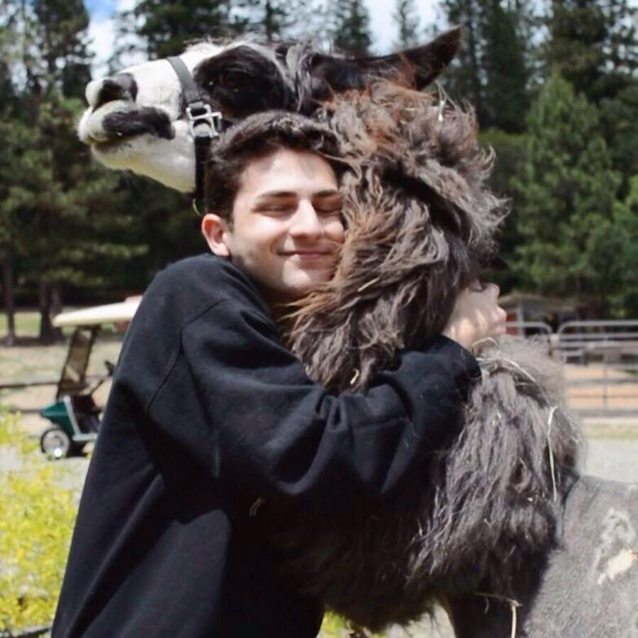 Twaimz really likes llamas. *Llama llama shining shining looking like a diamond diamond 💎💎*