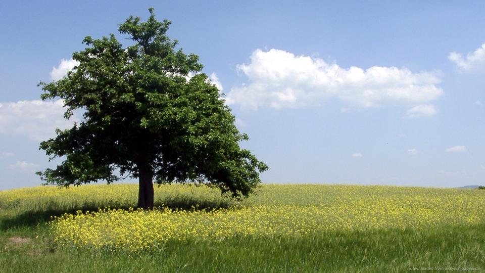 21. Nap under a shaded tree