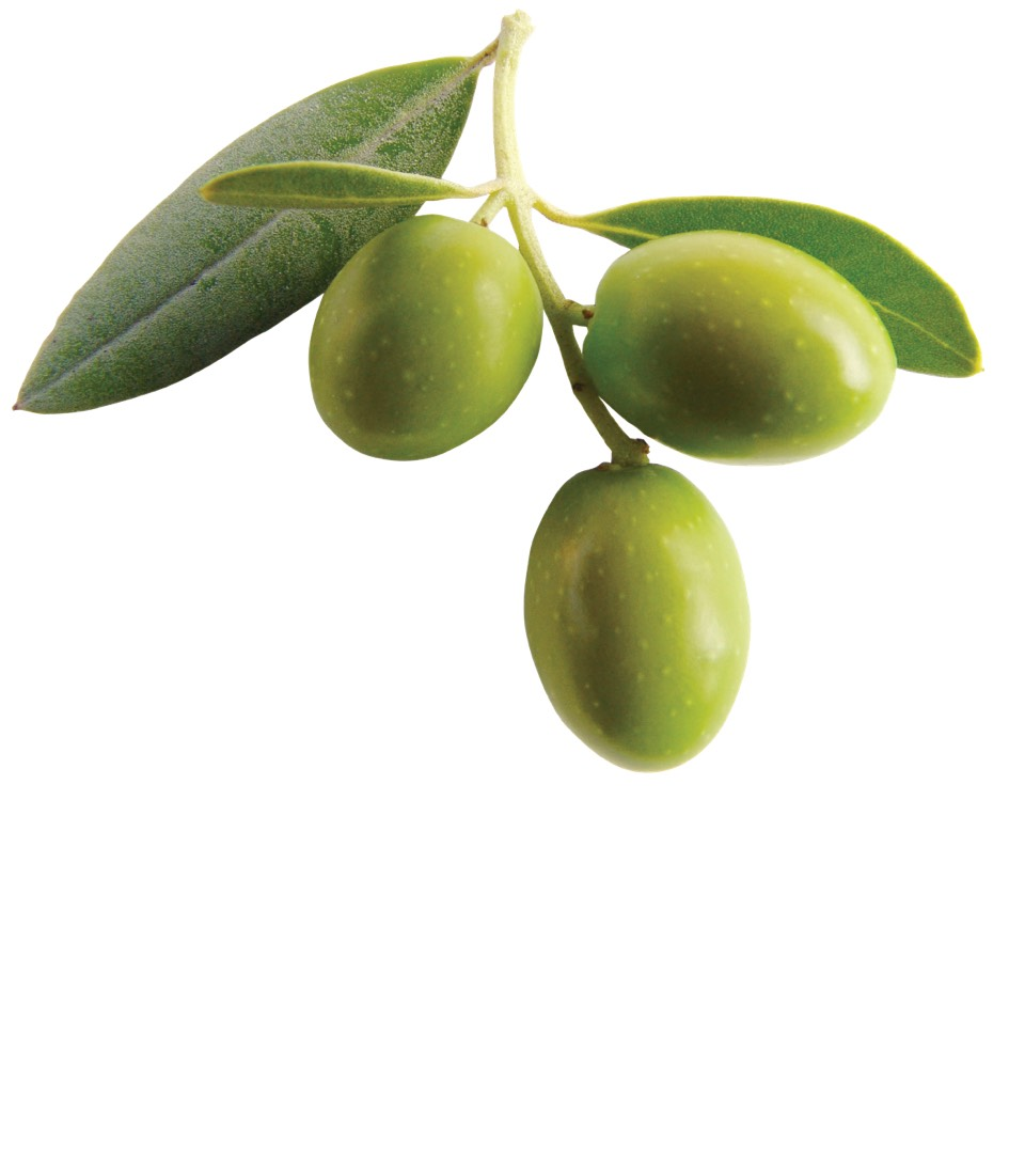MOTION SICKNESS: eat olives OR lemons to cure motion sickness